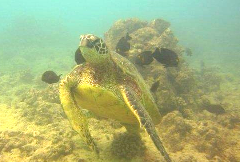 adventure vacation ideas scuba honolulu