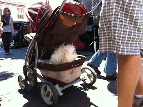 put their dogs in strollers